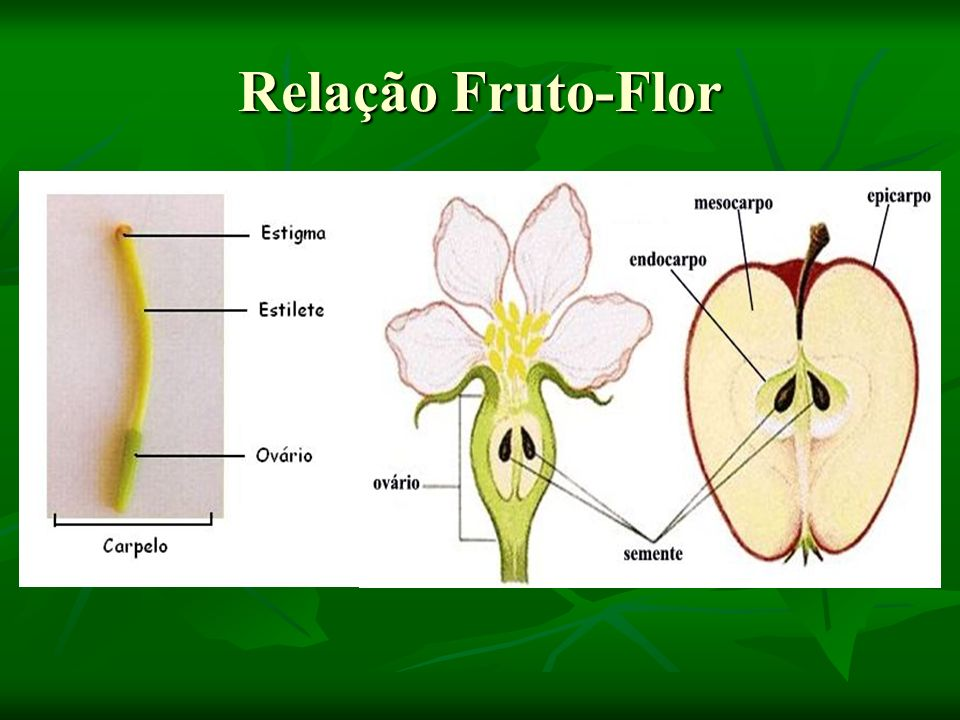 Relação Fruto-Flor