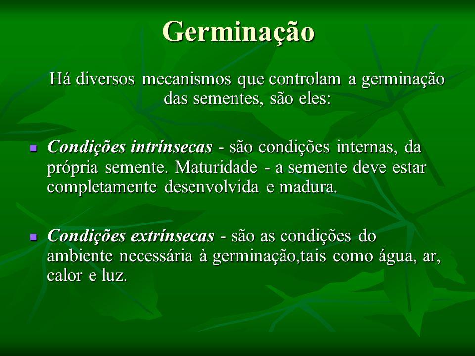 Germinação Há diversos mecanismos que controlam a germinação das sementes, são eles: