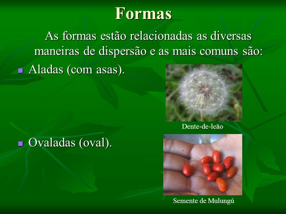 Formas As formas estão relacionadas as diversas maneiras de dispersão e as mais comuns são: Aladas (com asas).