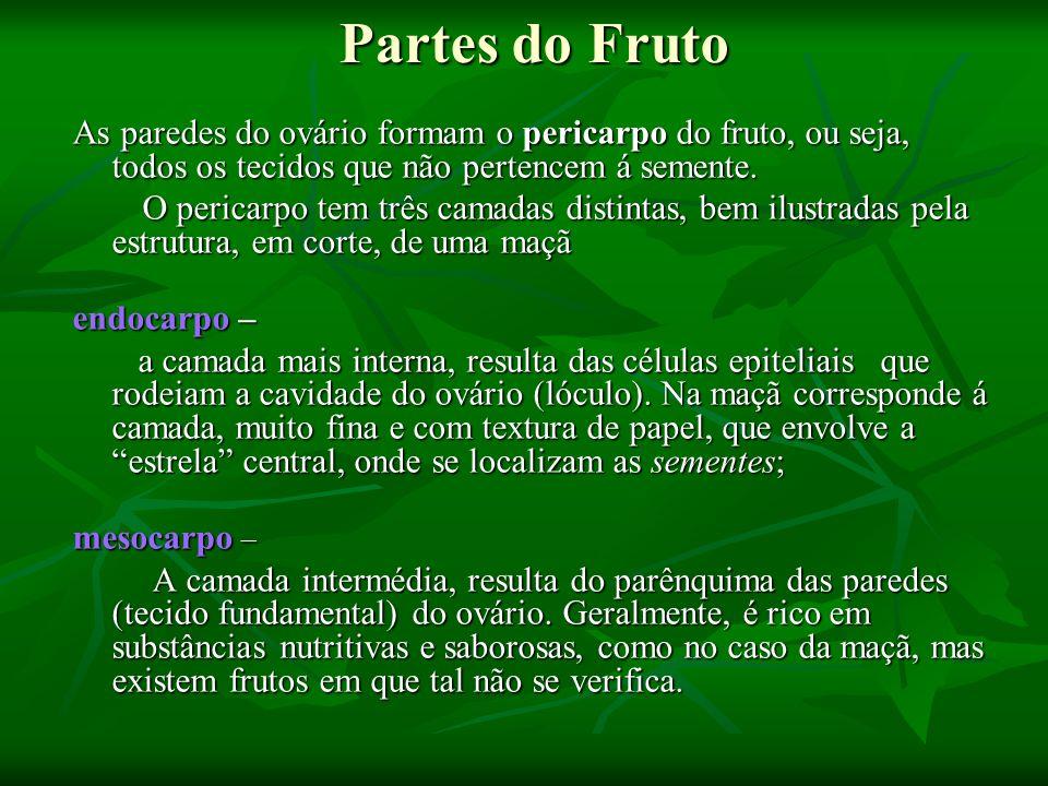 Partes do Fruto As paredes do ovário formam o pericarpo do fruto, ou seja, todos os tecidos que não pertencem á semente.