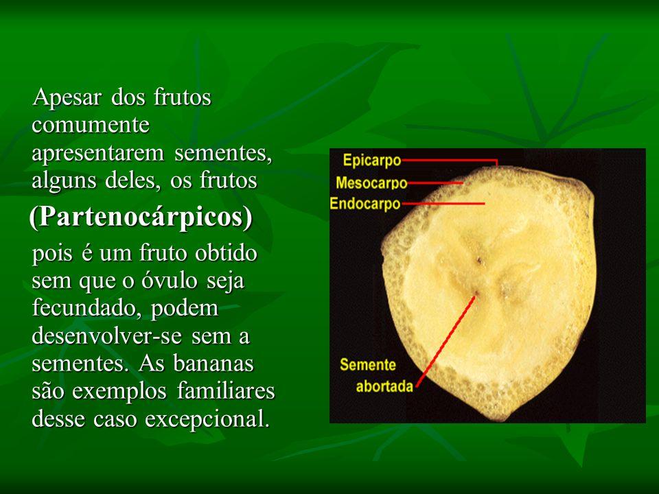 Apesar dos frutos comumente apresentarem sementes, alguns deles, os frutos
