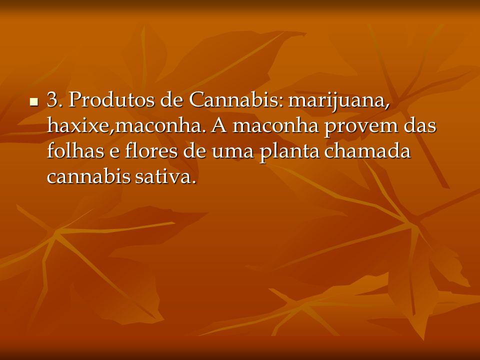 3. Produtos de Cannabis: marijuana, haxixe,maconha