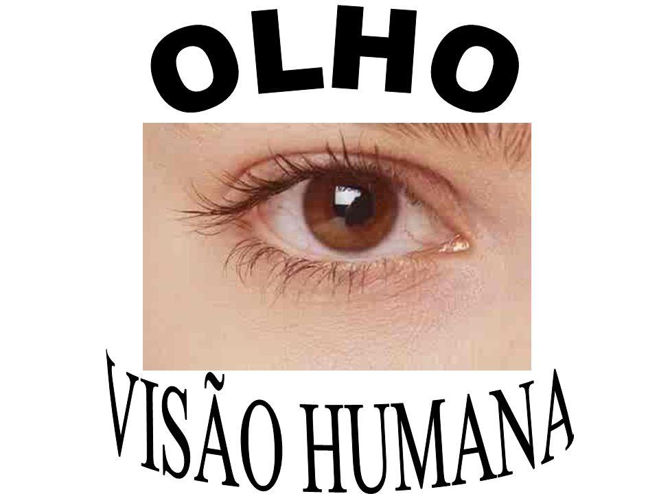 OLHO VISÃO HUMANA