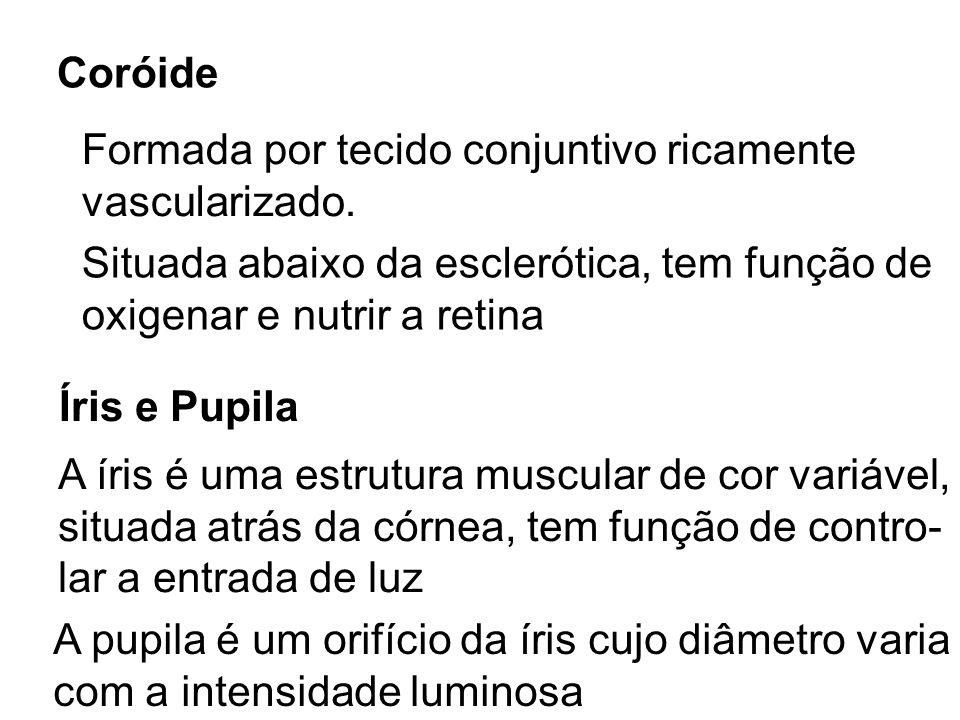 CoróideFormada por tecido conjuntivo ricamente. vascularizado. Situada abaixo da esclerótica, tem função de.