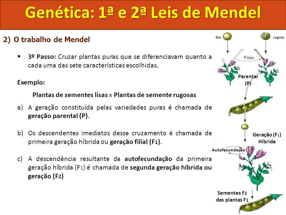 Genética: 1ª e 2ª Leis de Mendel Sementes F2 das plantas F1