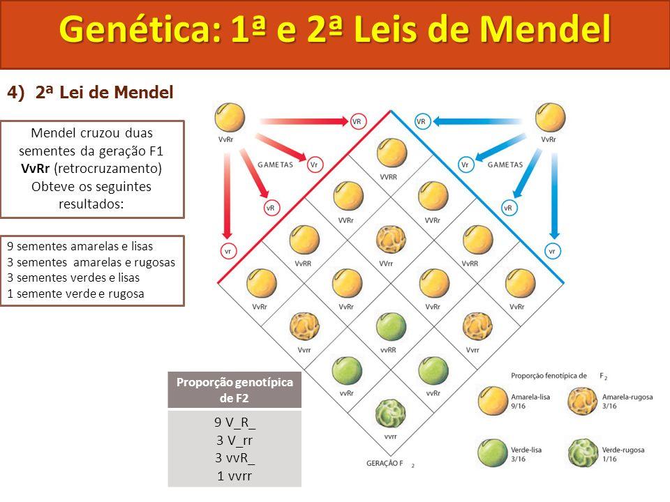 Genética: 1ª e 2ª Leis de Mendel Proporção genotípica de F2