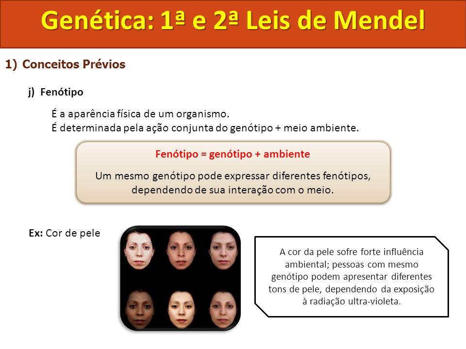 Genética: 1ª e 2ª Leis de Mendel Fenótipo = genótipo + ambiente