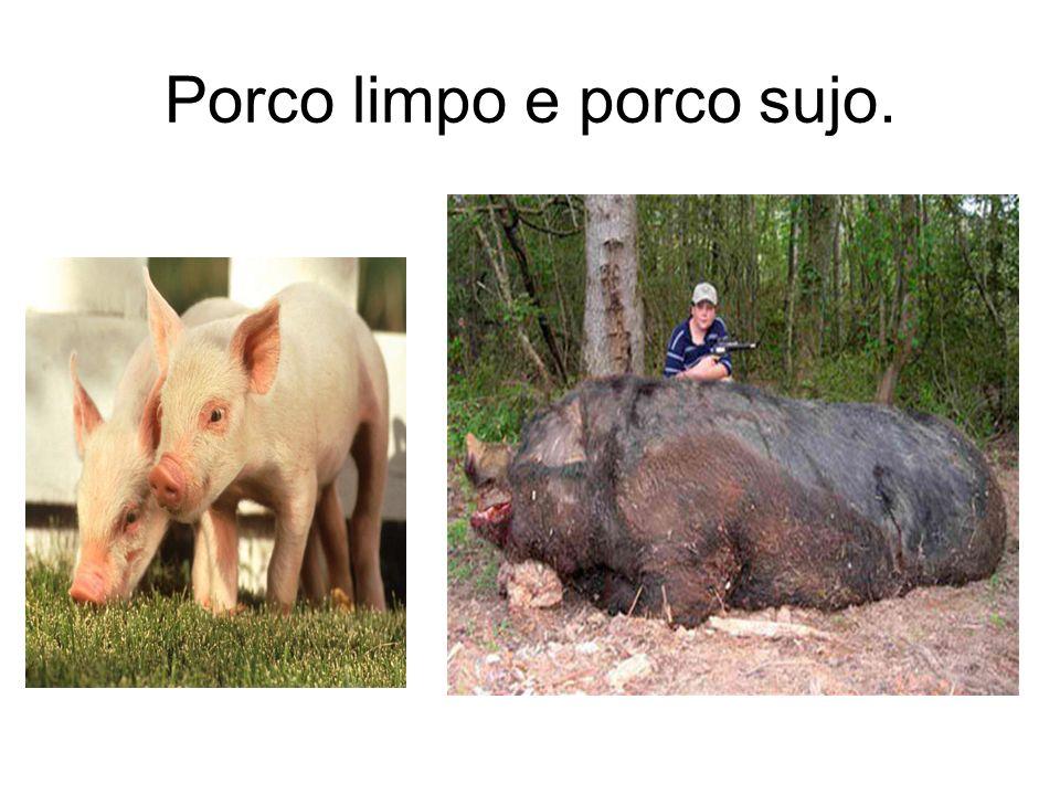 Porco limpo e porco sujo.