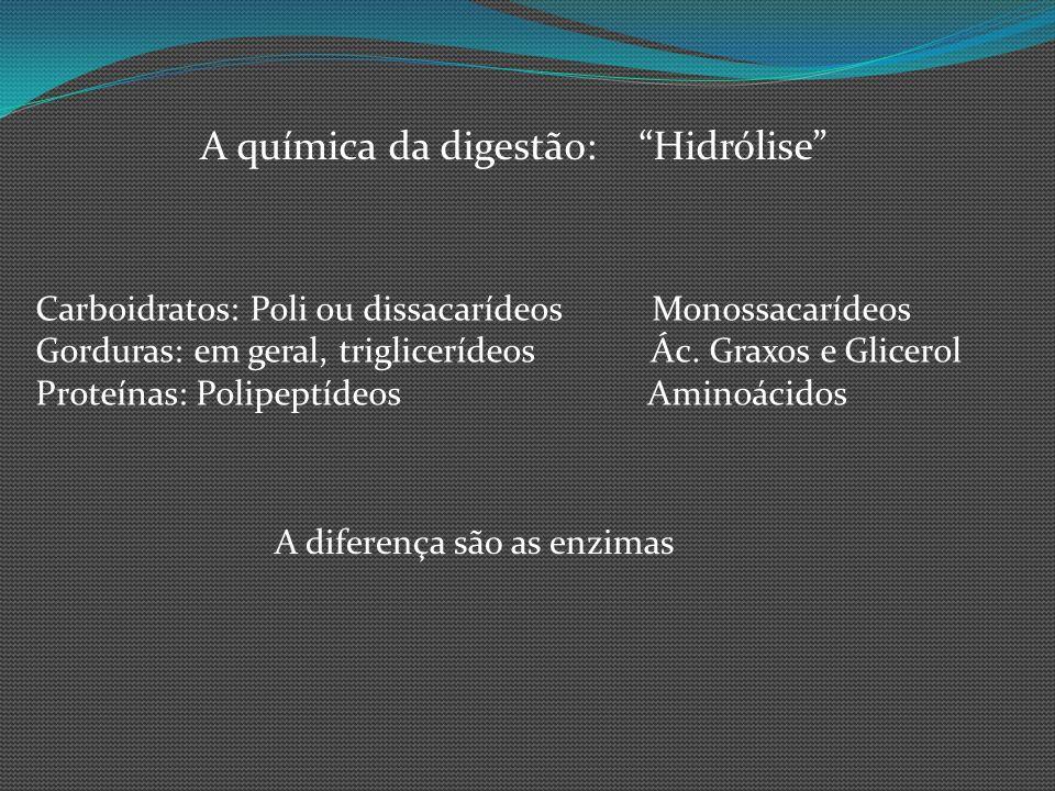 A química da digestão: Hidrólise