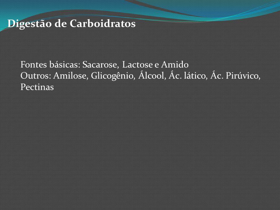 Digestão de Carboidratos