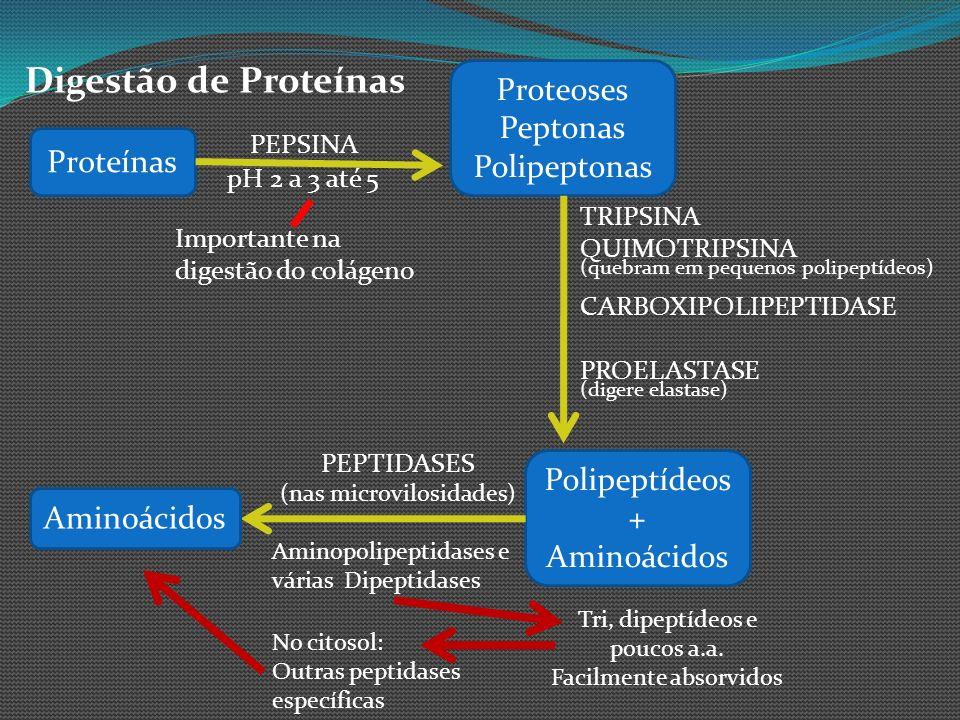 Digestão de Proteínas Proteoses Peptonas Polipeptonas Proteínas