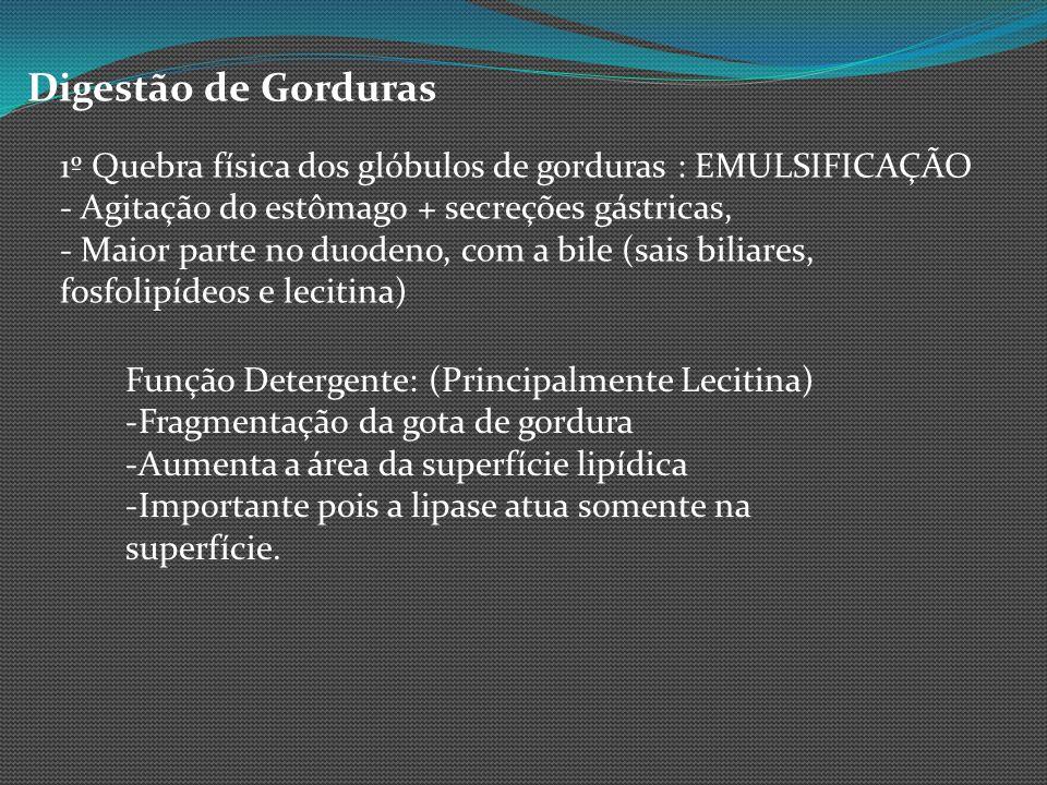Digestão de Gorduras 1º Quebra física dos glóbulos de gorduras : EMULSIFICAÇÃO. - Agitação do estômago + secreções gástricas,