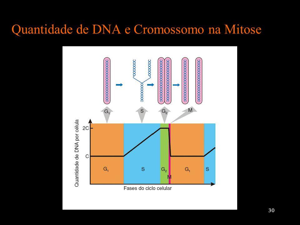 Quantidade de DNA e Cromossomo na Mitose