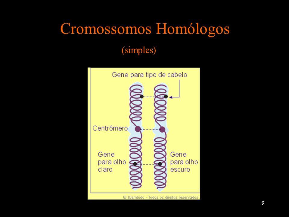 Cromossomos Homólogos (simples)