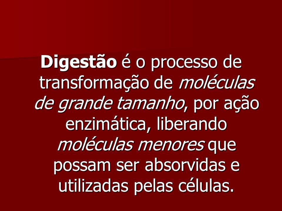 Digestão é o processo de transformação de moléculas de grande tamanho, por ação enzimática, liberando moléculas menores que possam ser absorvidas e utilizadas pelas células.