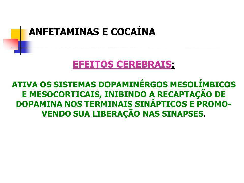 ANFETAMINAS E COCAÍNA EFEITOS CEREBRAIS: