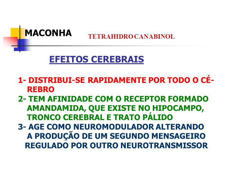 MACONHA EFEITOS CEREBRAIS 1- DISTRIBUI-SE RAPIDAMENTE POR TODO O CÉ-