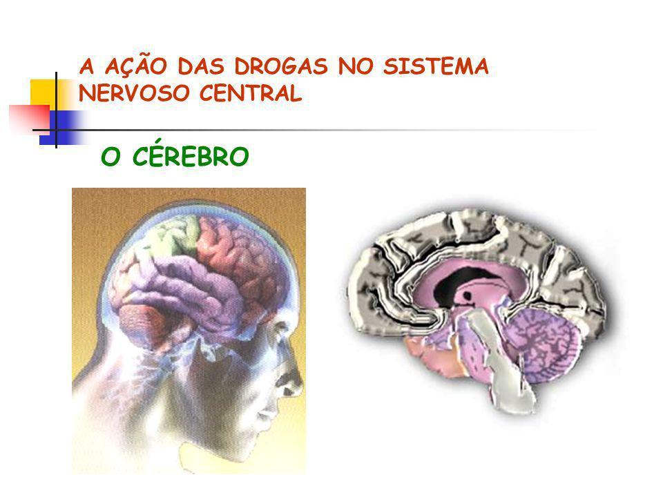 A AÇÃO DAS DROGAS NO SISTEMA NERVOSO CENTRAL
