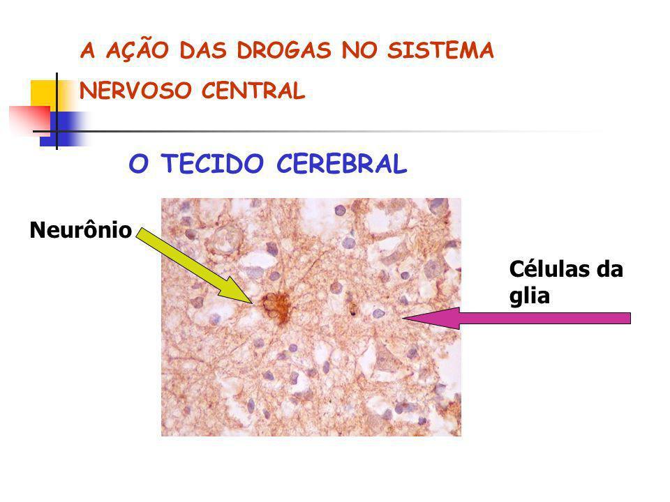 O TECIDO CEREBRAL A AÇÃO DAS DROGAS NO SISTEMA NERVOSO CENTRAL