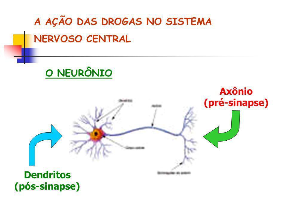 A AÇÃO DAS DROGAS NO SISTEMA