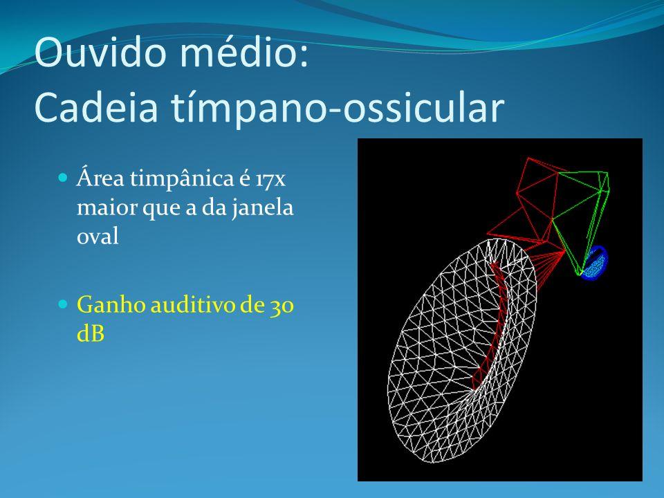 Ouvido médio: Cadeia tímpano-ossicular
