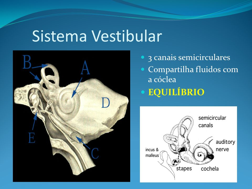 Sistema Vestibular EQUILÍBRIO 3 canais semicirculares