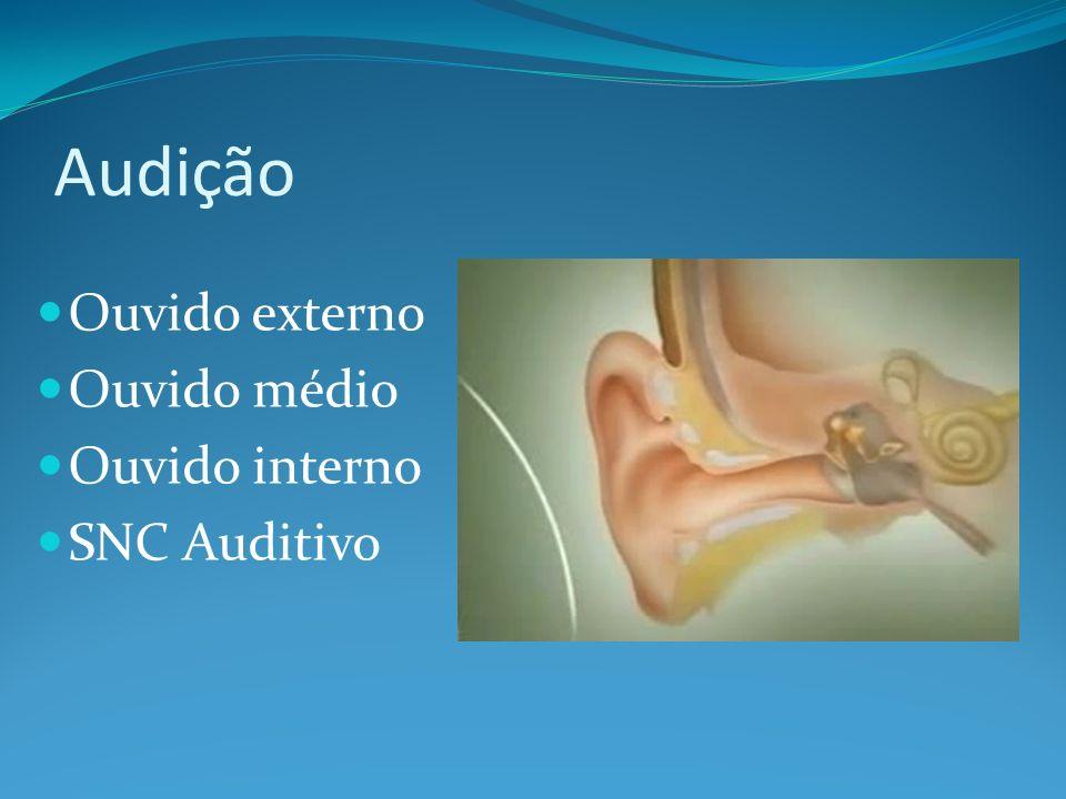Audição Ouvido externo Ouvido médio Ouvido interno SNC Auditivo