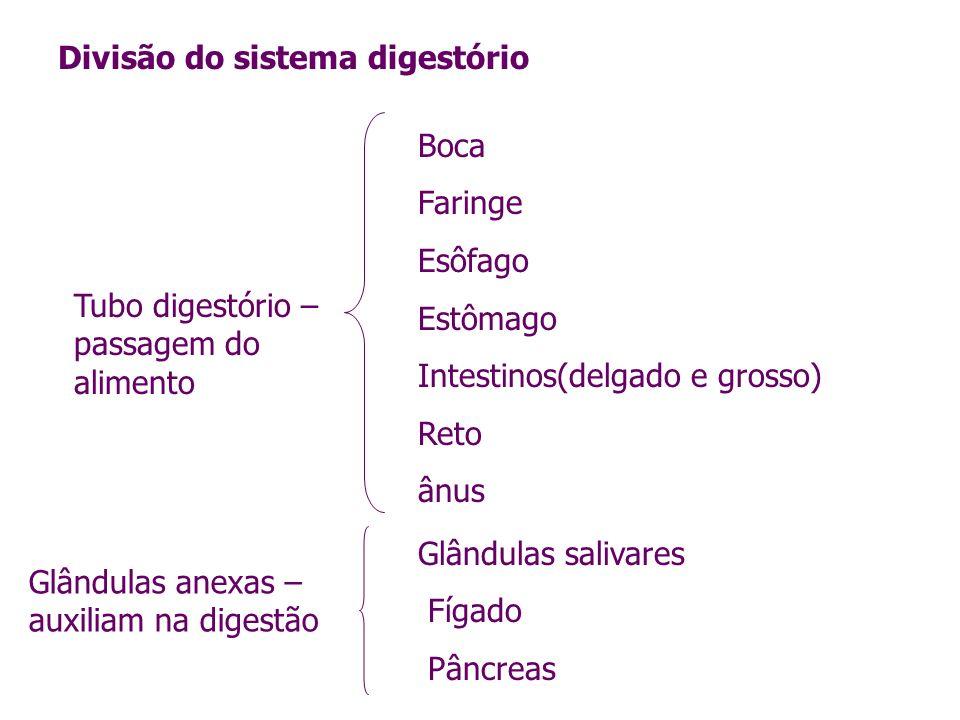 Divisão do sistema digestório