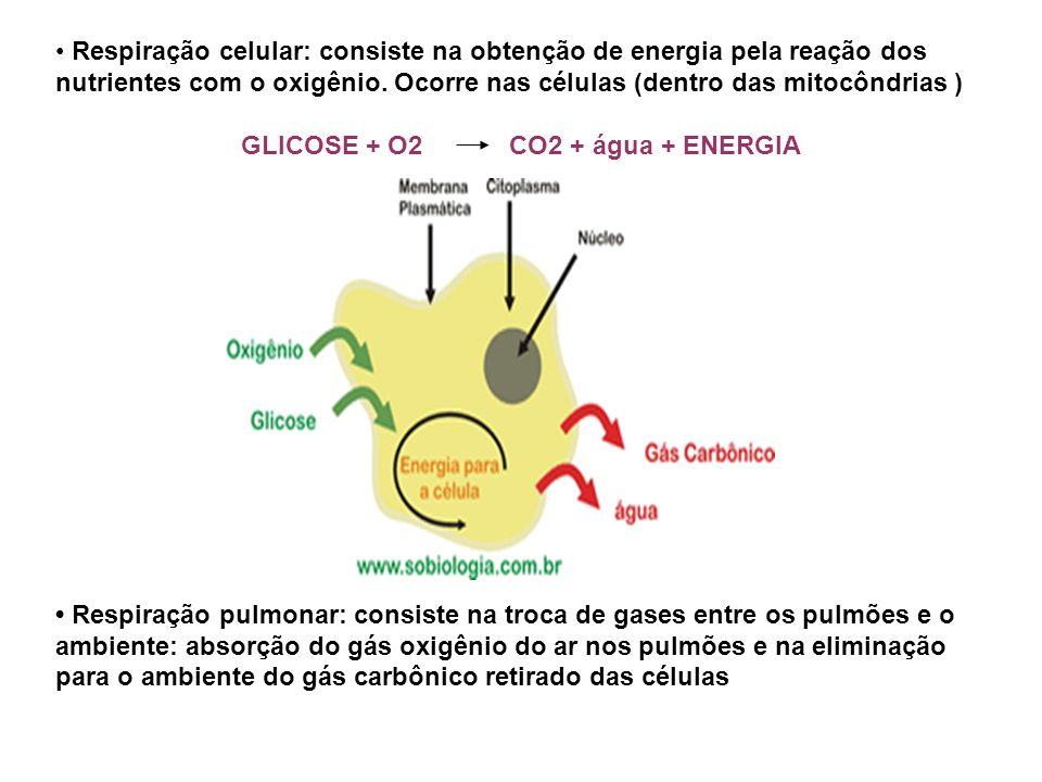 GLICOSE + O2 CO2 + água + ENERGIA