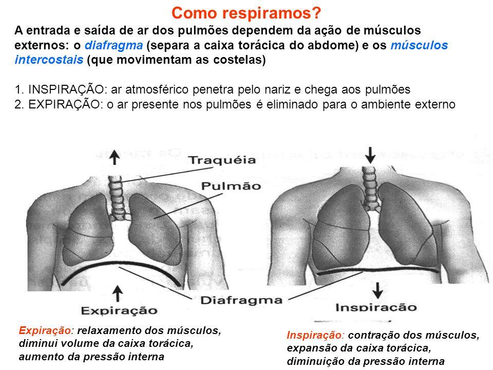 Como respiramos A entrada e saída de ar dos pulmões dependem da ação de músculos.