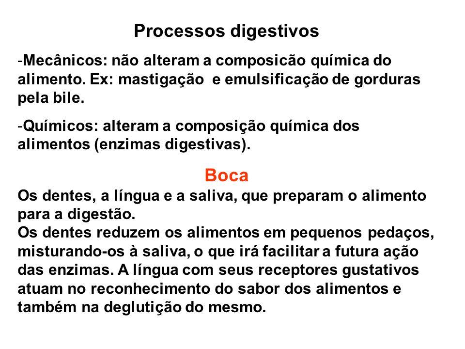 Processos digestivos Boca