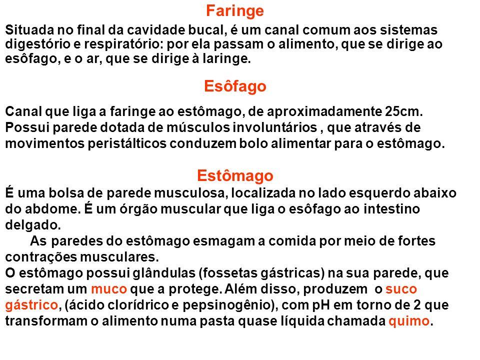 Faringe Esôfago Estômago