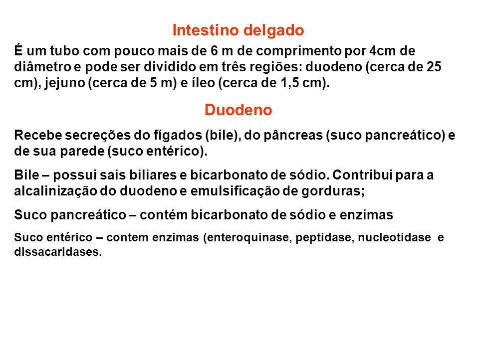 Intestino delgado Duodeno