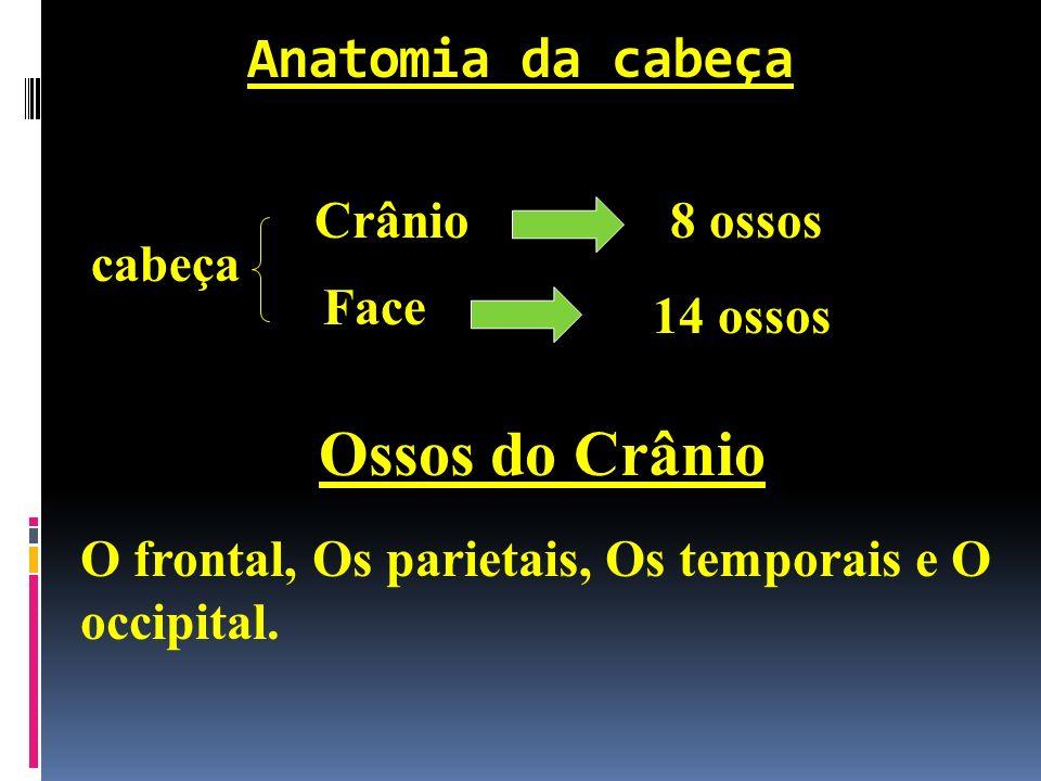 Ossos do Crânio Anatomia da cabeça Crânio 8 ossos cabeça Face 14 ossos