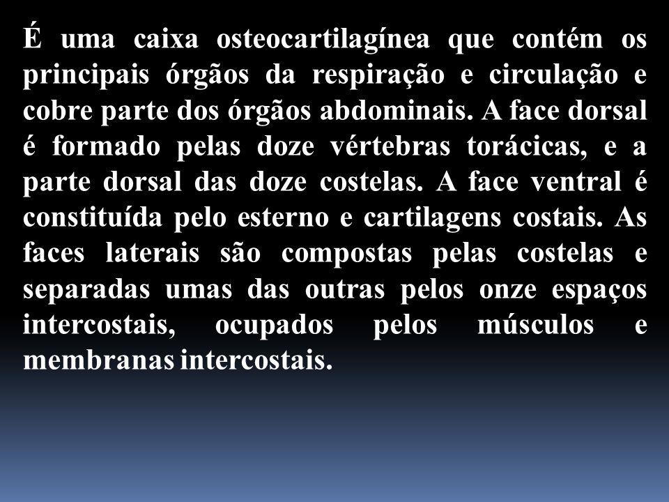 É uma caixa osteocartilagínea que contém os principais órgãos da respiração e circulação e cobre parte dos órgãos abdominais.