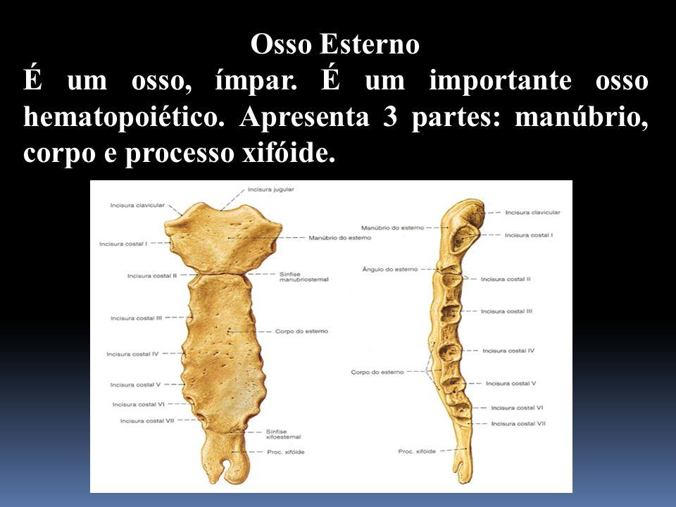 Osso EsternoÉ um osso, ímpar.É um importante osso hematopoiético.