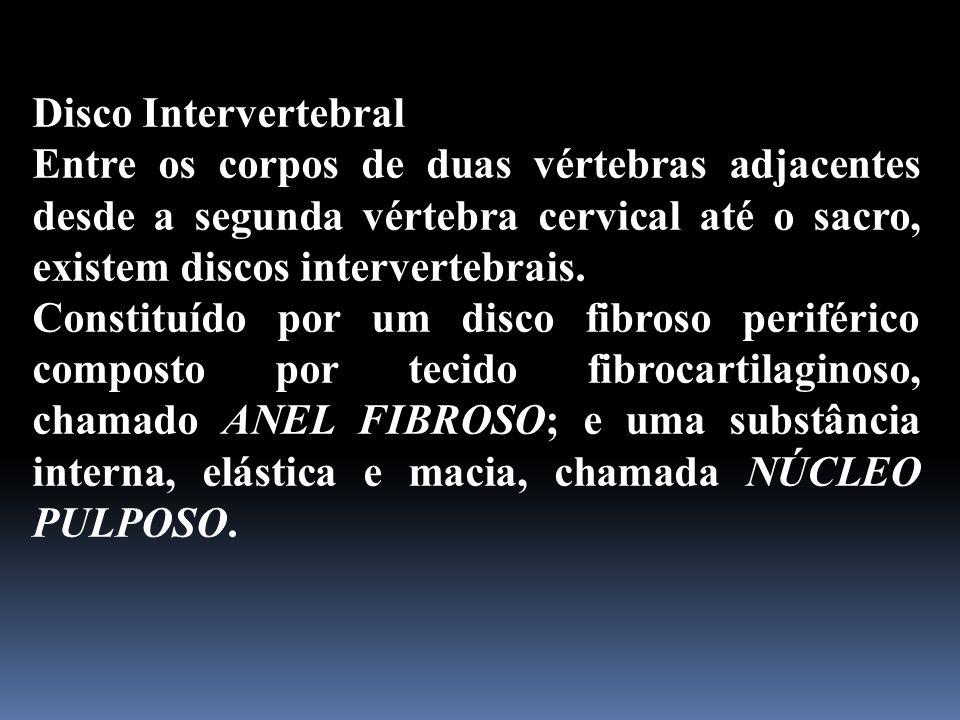 Disco Intervertebral Entre os corpos de duas vértebras adjacentes desde a segunda vértebra cervical até o sacro, existem discos intervertebrais.