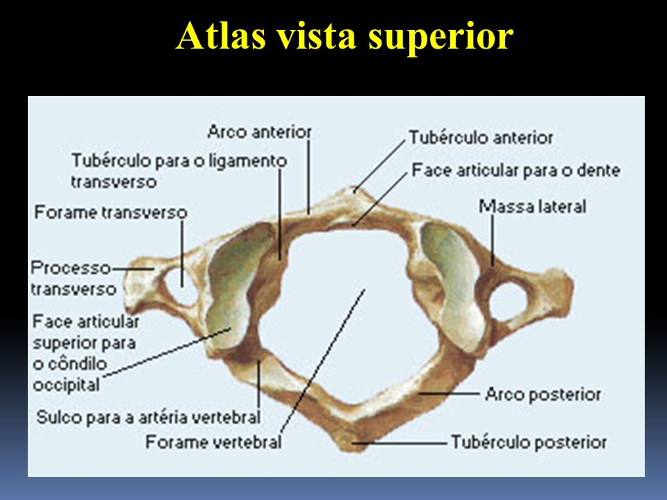 Atlas vista superior