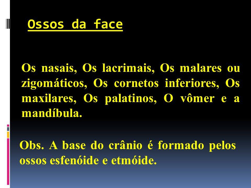 Ossos da face Os nasais, Os lacrimais, Os malares ou zigomáticos, Os cornetos inferiores, Os maxilares, Os palatinos, O vômer e a mandíbula.