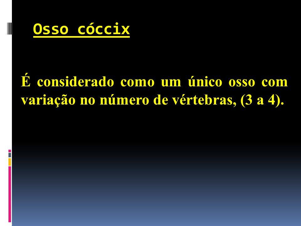 Osso cóccix É considerado como um único osso com variação no número de vértebras, (3 a 4).