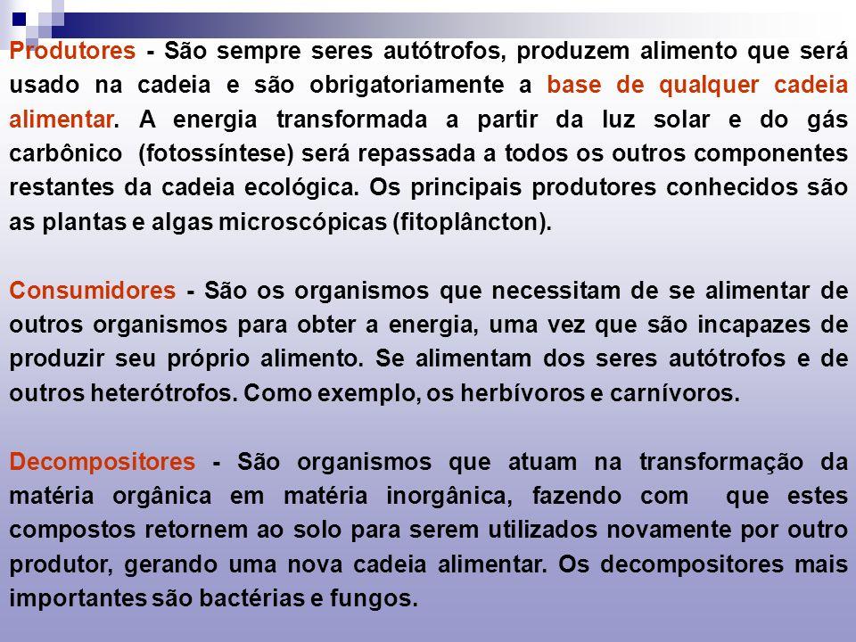 Produtores - São sempre seres autótrofos, produzem alimento que será usado na cadeia e são obrigatoriamente a base de qualquer cadeia alimentar. A energia transformada a partir da luz solar e do gás carbônico (fotossíntese) será repassada a todos os outros componentes restantes da cadeia ecológica. Os principais produtores conhecidos são as plantas e algas microscópicas (fitoplâncton).