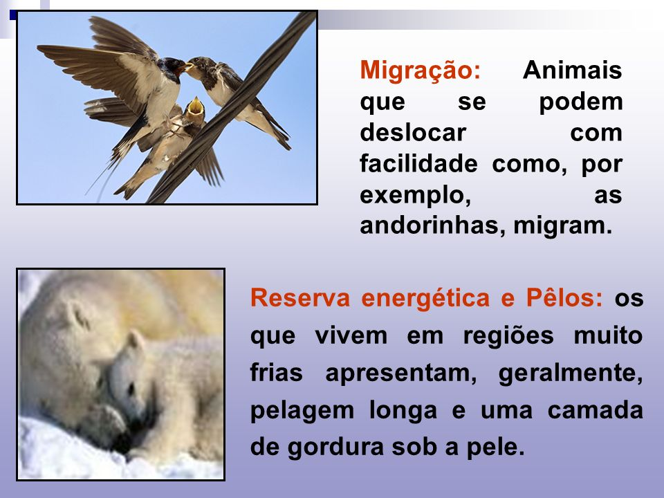 Migração: Animais que se podem deslocar com facilidade como, por exemplo, as andorinhas, migram.