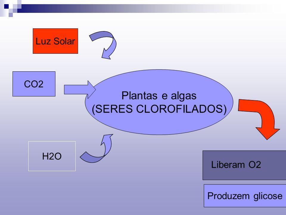 Plantas e algas (SERES CLOROFILADOS) Luz Solar CO2 H2O Liberam O2