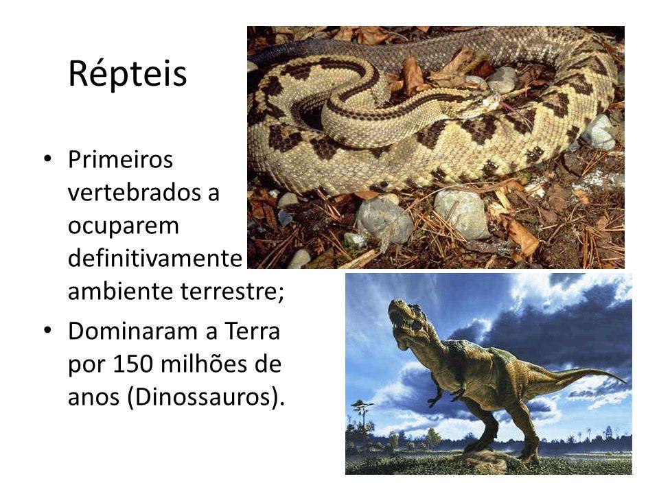 Répteis Primeiros vertebrados a ocuparem definitivamente o ambiente terrestre; Dominaram a Terra por 150 milhões de anos (Dinossauros).