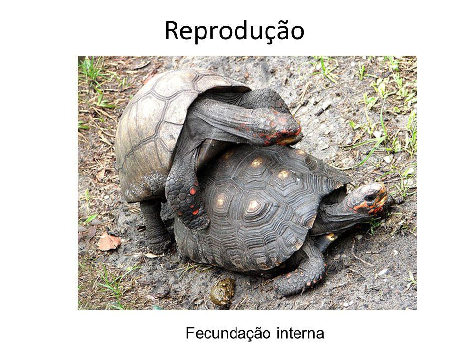 Reprodução Fecundação interna