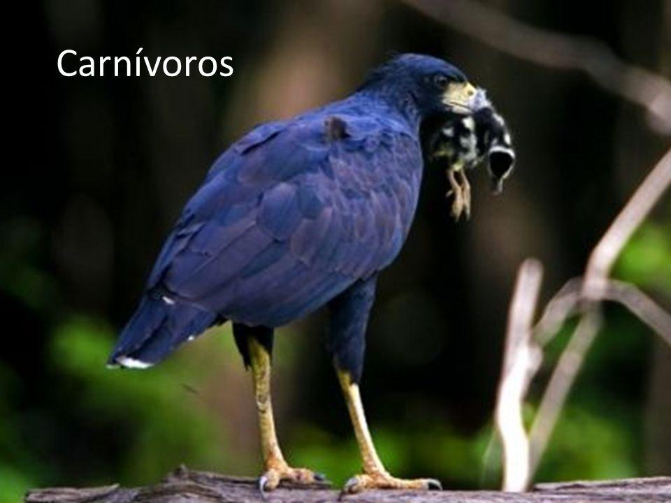Carnívoros