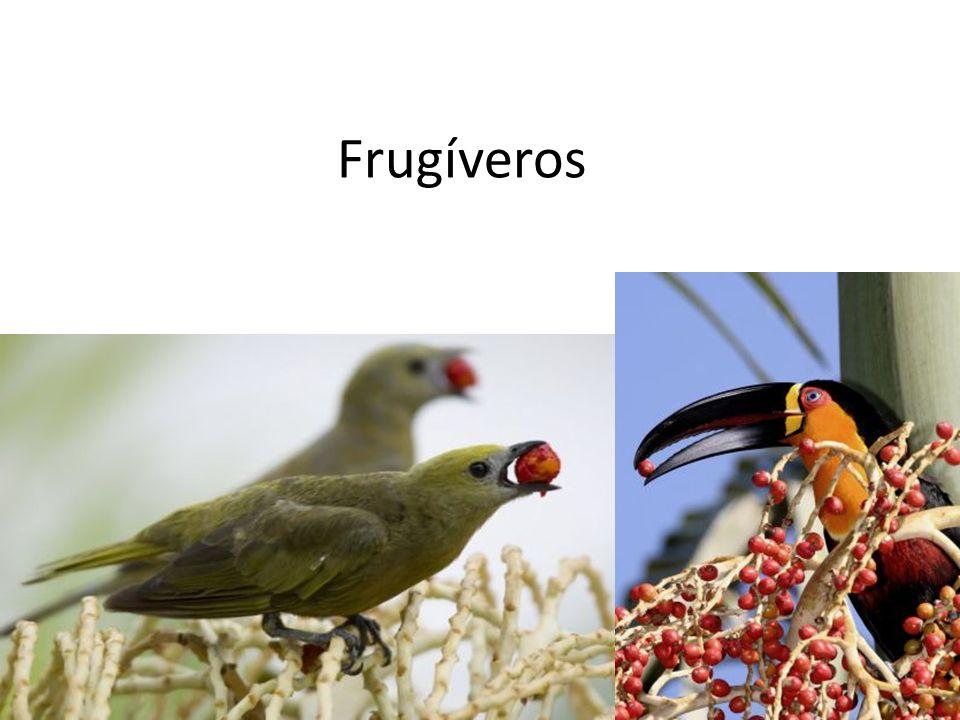 Frugíveros