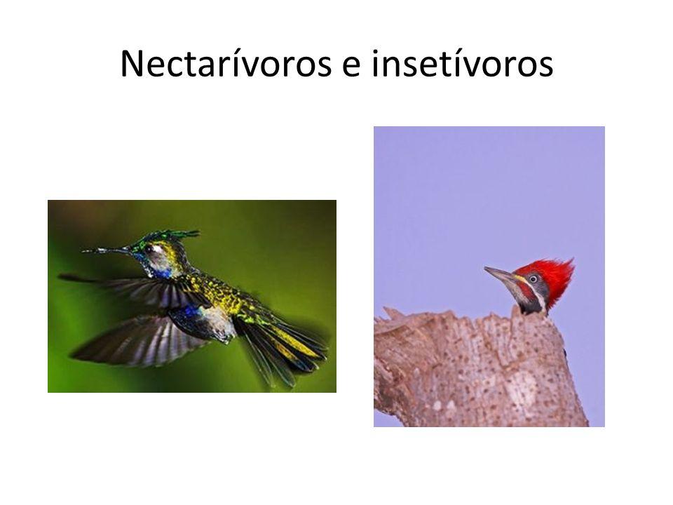 Nectarívoros e insetívoros