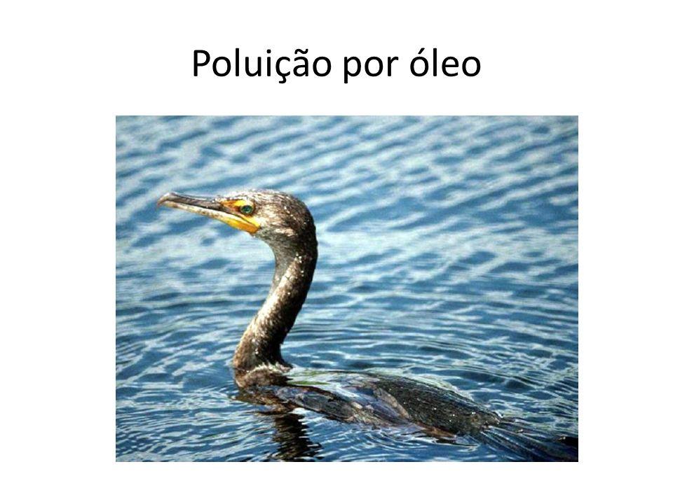 Poluição por óleo