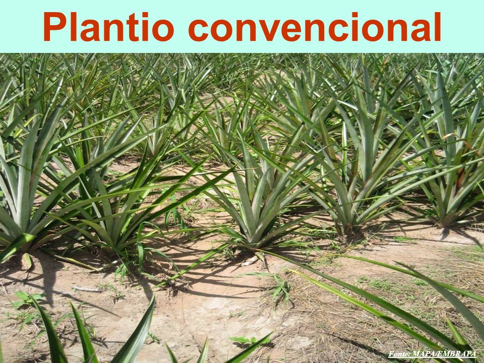 Plantio convencional O DESAFIO GLOBAL O DESAFIO GLOBAL